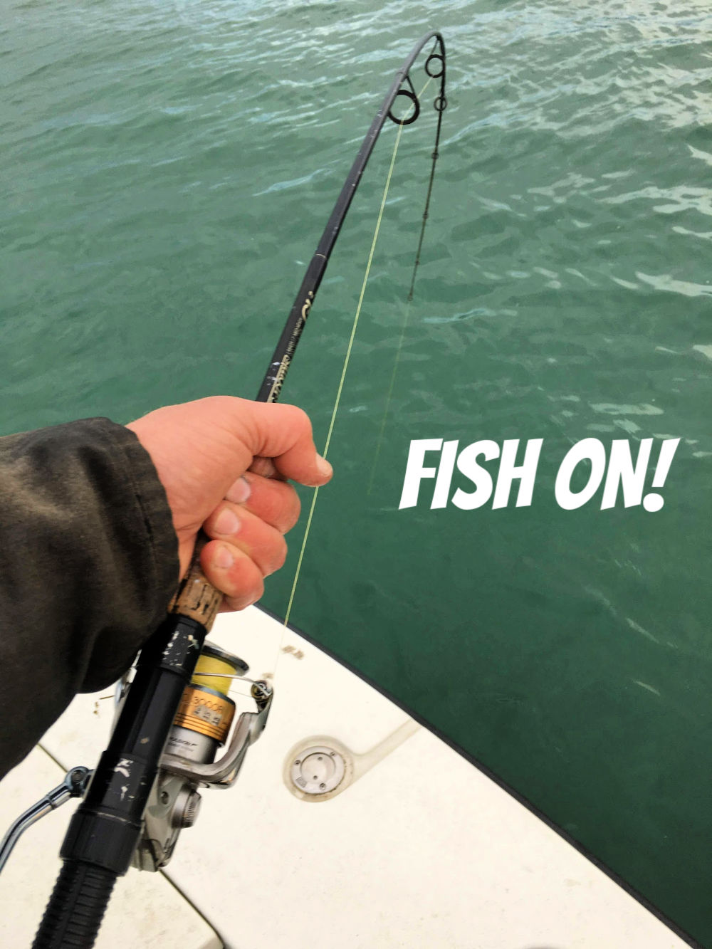 fish on and contact fishbus charters